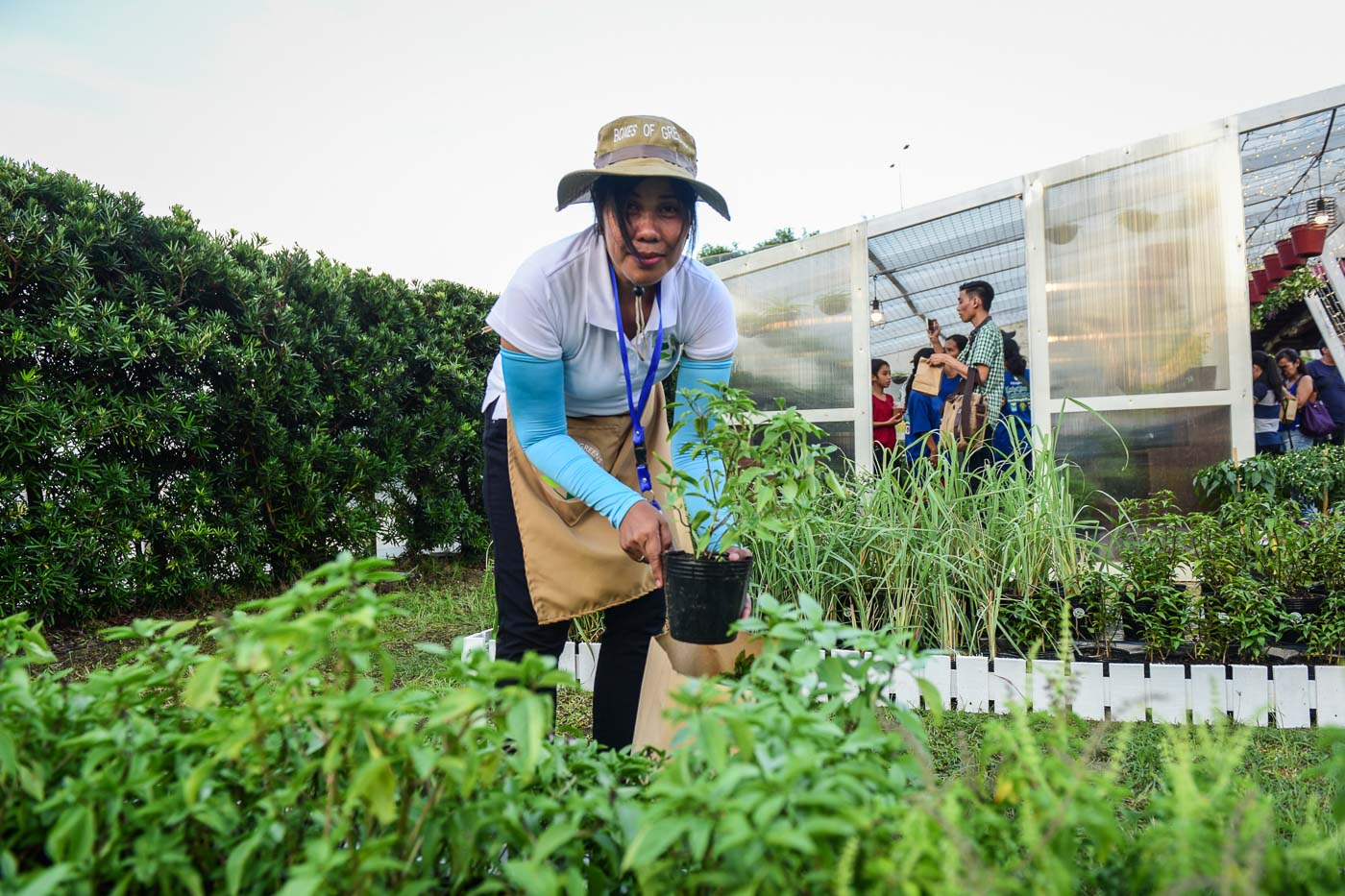 Freshly-picked greens from the in-mall garden. Photo by LeAnne Jazul/Rappler