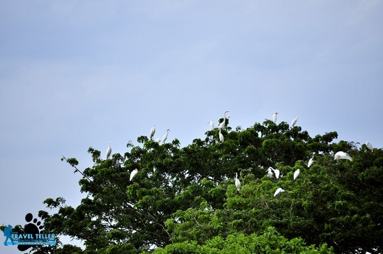 MORNING AND EVENING. The birds flock to the sanctuary early in the morning and before sunset.