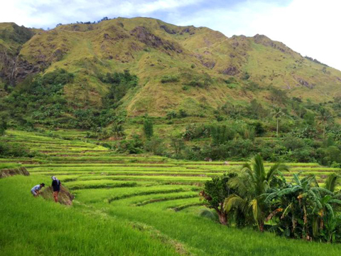 RICE TERRACES. Antique also has its own painstakingly carved terraces for rice farming. Photo by Alex Moscoso Espau00f1ola