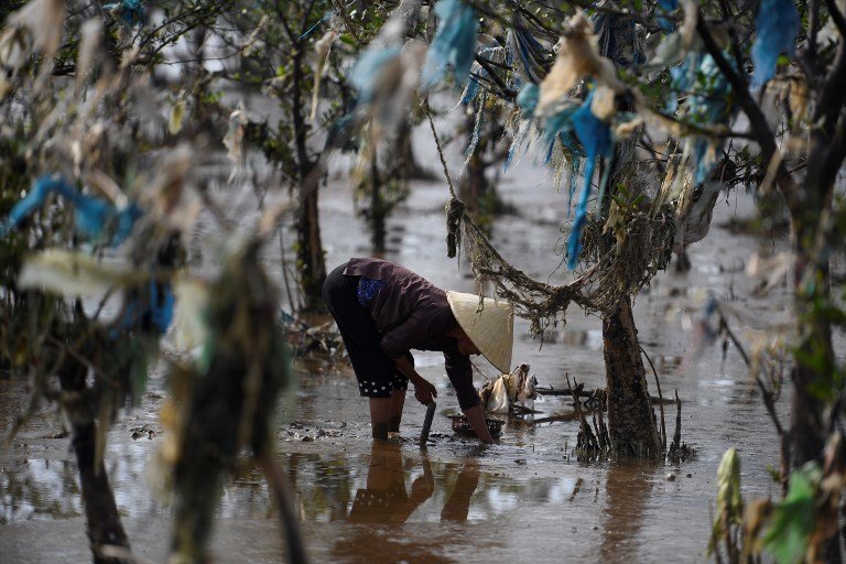 PLASTIC POLLUTION. In this picture taken on May 18, 2018, a Vietnamese woman gathers shells in a coastal forest littered with plastic waste stuck in branches after it was washed up by rising coastal tide in Thanh Hoa province, around 150 kilometres south of Hanoi. Photo by Nhac Nguyen/AFP
