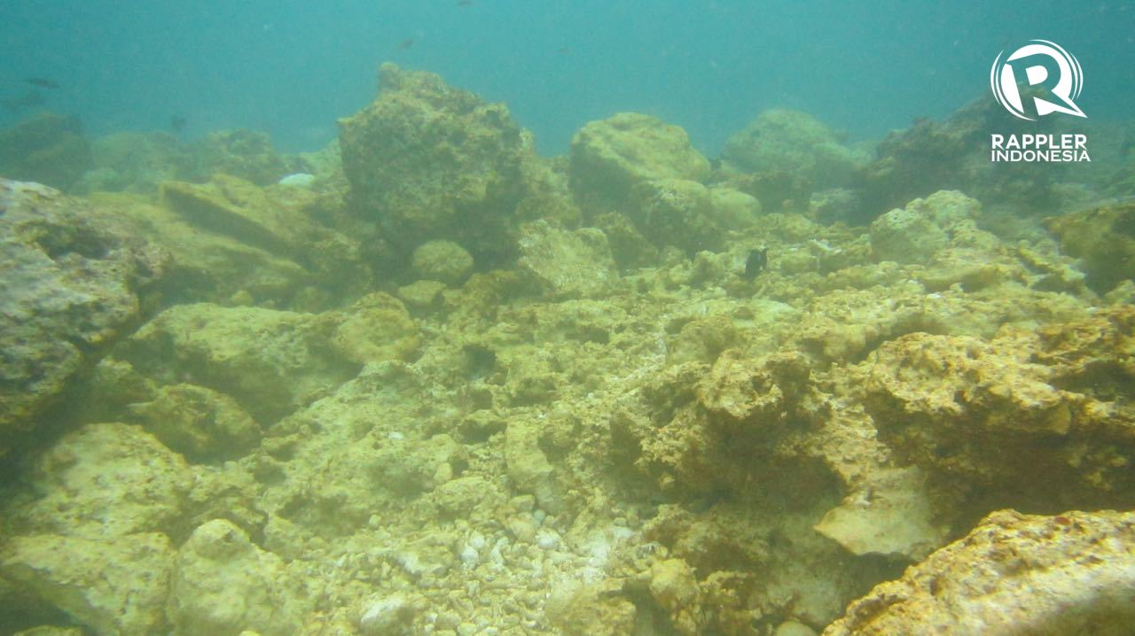 DESTROYED. About 1,600 square meters of coral reef was damaged by the cruise ship. Photo from the Ministry of Environment and Forestry