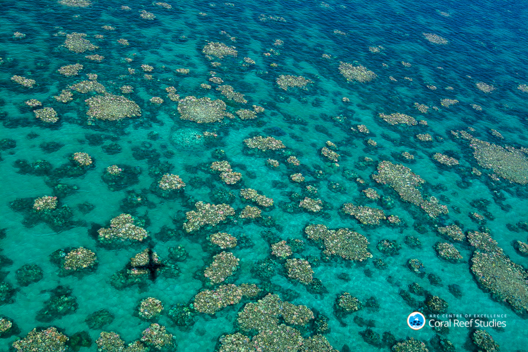 IN DANGER. An aerial view of a section of the Great Barrier Reef near Cairns, Australia, March 2017. File photo courtesy of Ed Roberts/ARC Centre of Excellence for Coral Reef Studies