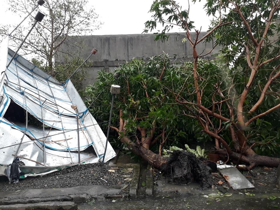 UPROOTED. Trees at a residence in Alicia are knocked down. Photo by Leah Javier