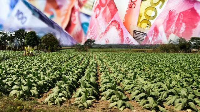 MISUSED. Tobacco funds are ideally for projects that help and boost the productivity and income of farmers. File photo by Rappler