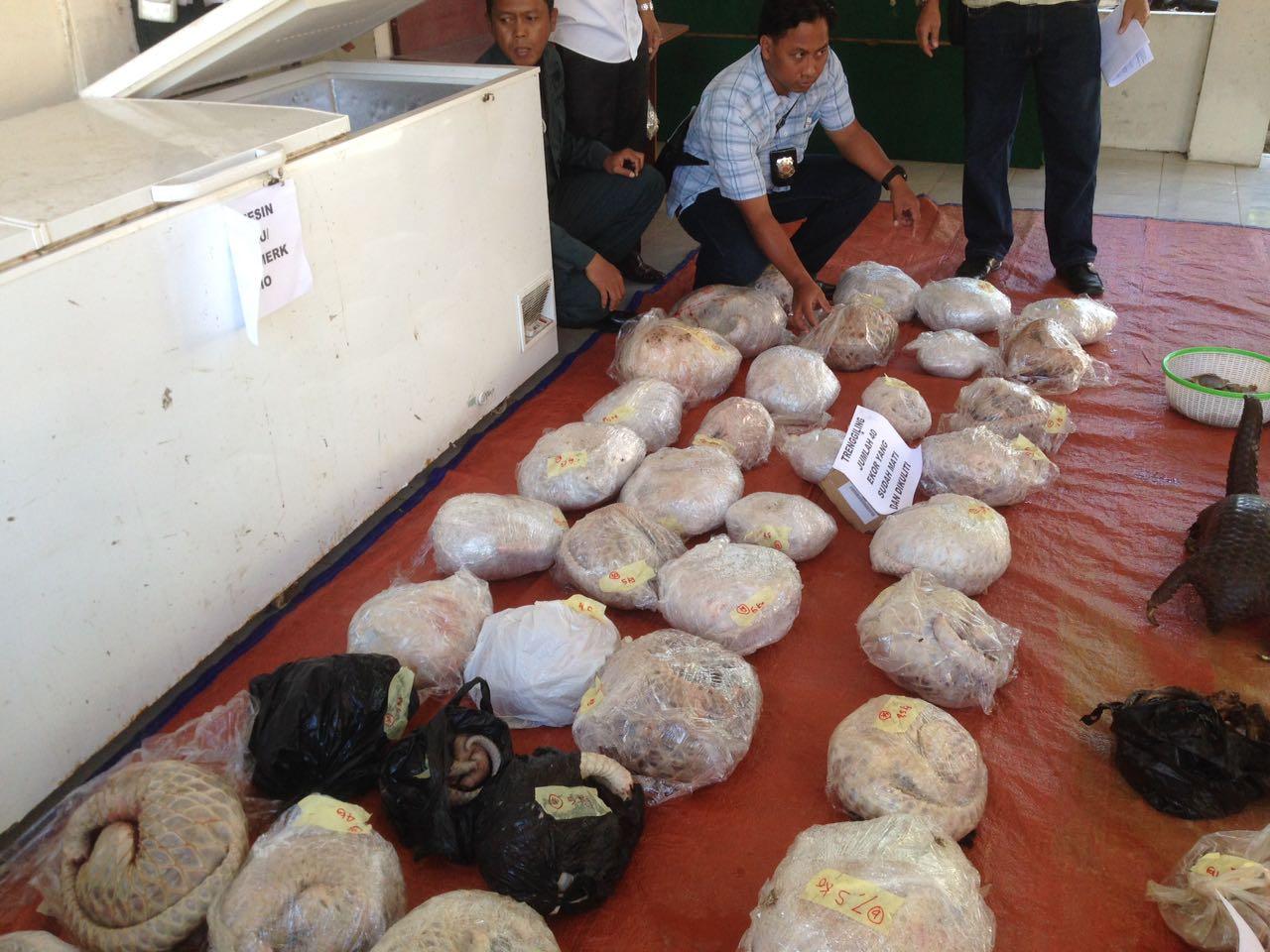 Petugas mengungkap penyelundupan sisik trenggiling di Kalimantan Barat, Rabu (26/10). Foto oleh Slamet Ardiansyah/Rappler