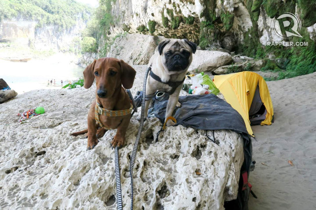 ADVENTURE BUDDIES. Waiting for food is a favorite pastime of these two adventure doggos while in the campsite. All photos by Dru Robles