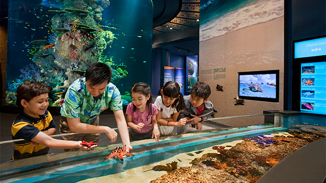 WONDERS OF THE SEA. The S.E.A. Aquarium is home to 100,000 marine animals from 800 species and across 49 different habitats