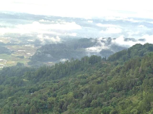 PESONA KAMPUNG LOLAI. Rimbunan pepohonan yang memanjakan mata para wisatawan di kampung Lolai. Foto oleh Syarifah Fitriani/Rappler