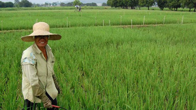 DISMAL. The agriculture sector posts meager growth in the 2nd quarter of 2018. Rappler file photo