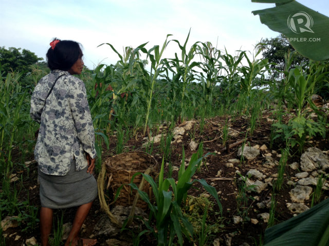 KAINGIN. Kaingin or swidden farming is part of the Hanunuo Mangyan's lives. Photo by Fritzie Rodriguez/Rappler