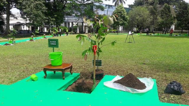 POHON. Salah satu jenis pohon yang ditanam oleh Pangeran Saudi di Istana Bogor pada Rabu, 1 Maret. Foto: istimewa