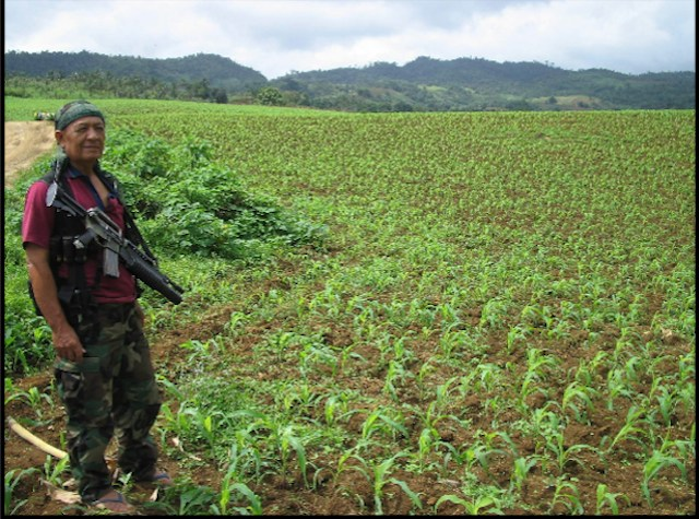FARMS WITH ARMS. A former MNLF fighter guarding his GEM-supported cornfield. Photo courtesy of Noel Ruiz