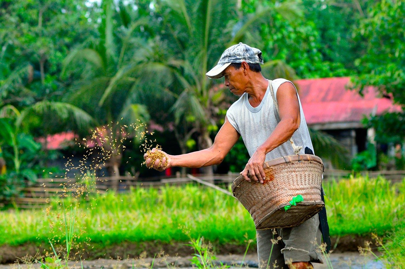 KEY SECTOR. A farmer tends to his crops in Pugo, La Union. File photo by Mau Victa/Rappler