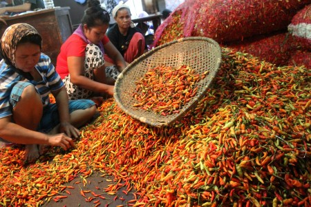 Buruh memetik cabai rawit merah di lapak pedagang agen Cabai, Pasar Induk Cibitung, Kabupaten Bekasi, Jawa Barat, Sabtu (7/1). Foto oleh Risky Andrianto/ANTARA