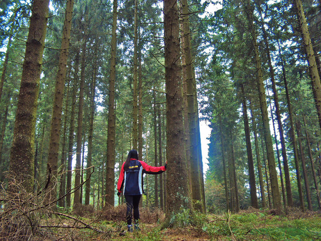 WANDERLUST. Trekking across the Ardennes' forest in Wallonia, Belgium
