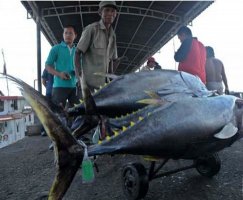 Para nelayan di Kupang, Nua Tenggara Timur menunjukkan hasil tangkapan mereka. Foto: Antara