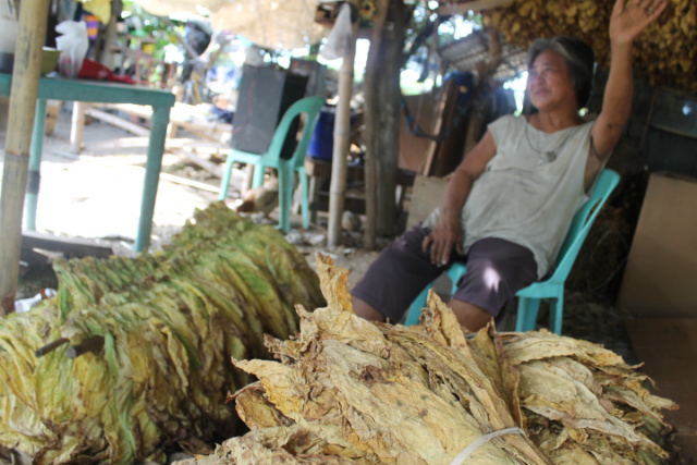 HARVEST TIME. Constancia Fernandez, 67, has been a tobacco farmer for the last 50 years. All photos by Jee Geronimo/Rappler