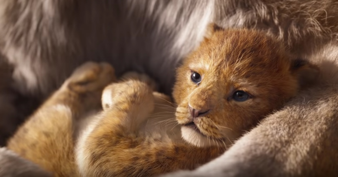 KING-TO-BE. 24 years after the original 1994 animated film, The Lion King is bringing the animals of Pride Rock back to movie screens again. Screenshot from Walt Disney Studios