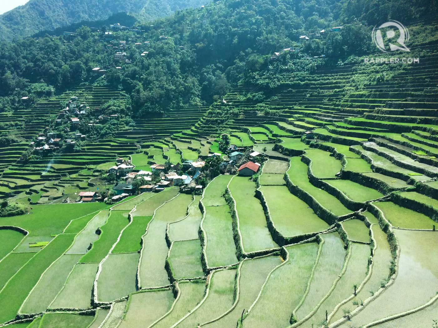 BATAD. There are currently 1,600 hectares of cultivated rice terraces in the municipality of Banaue, the most popular of which are the Batad rice terraces. Photo by Lian Buan/Rappler