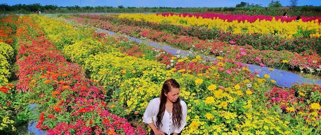 FLOWER STRIPES. Flower rows in different colors make the colors pop out all the more. Photo courtesy of MJ Cortez