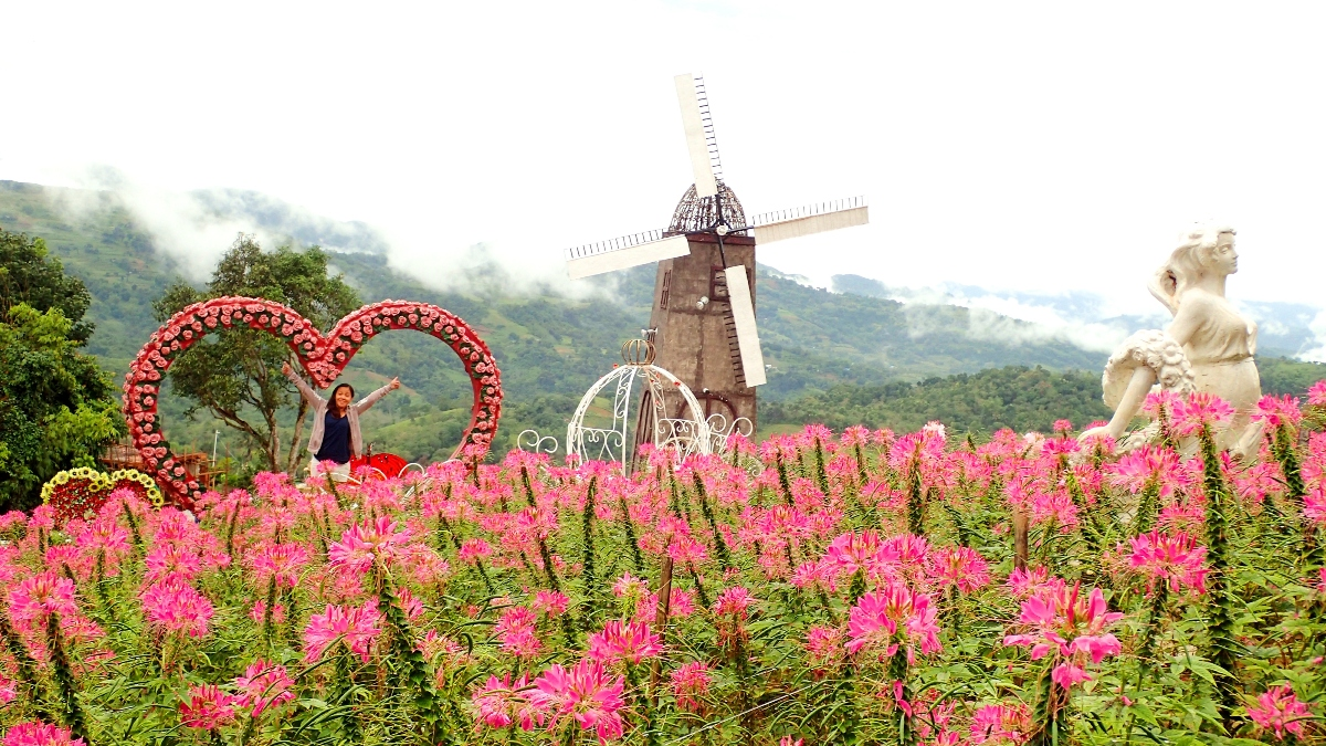 SCENIC. Sirao Garden has colorful flowers, backdrops like windmills, and mountains in the distance. The flowers here are pink queens, or spider flowers. Photo by Rhea Claire Madarang