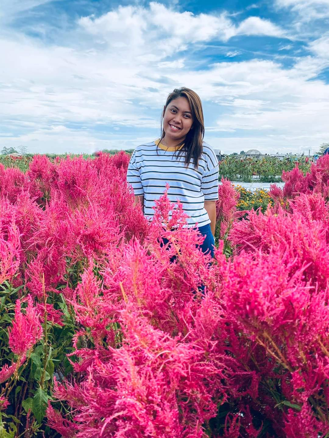 INKS. The farm has celosias in pink, not just the usual yellows and reds. Photo courtesy of Kat Lapira