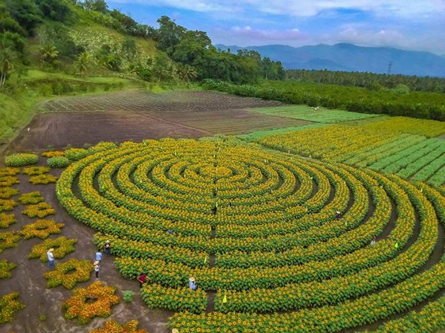 MANDALA. Marianou2019s has flowers planted in interesting patterns. Photo courtesy of Mariano's Blooming Agri-Tourism Park
