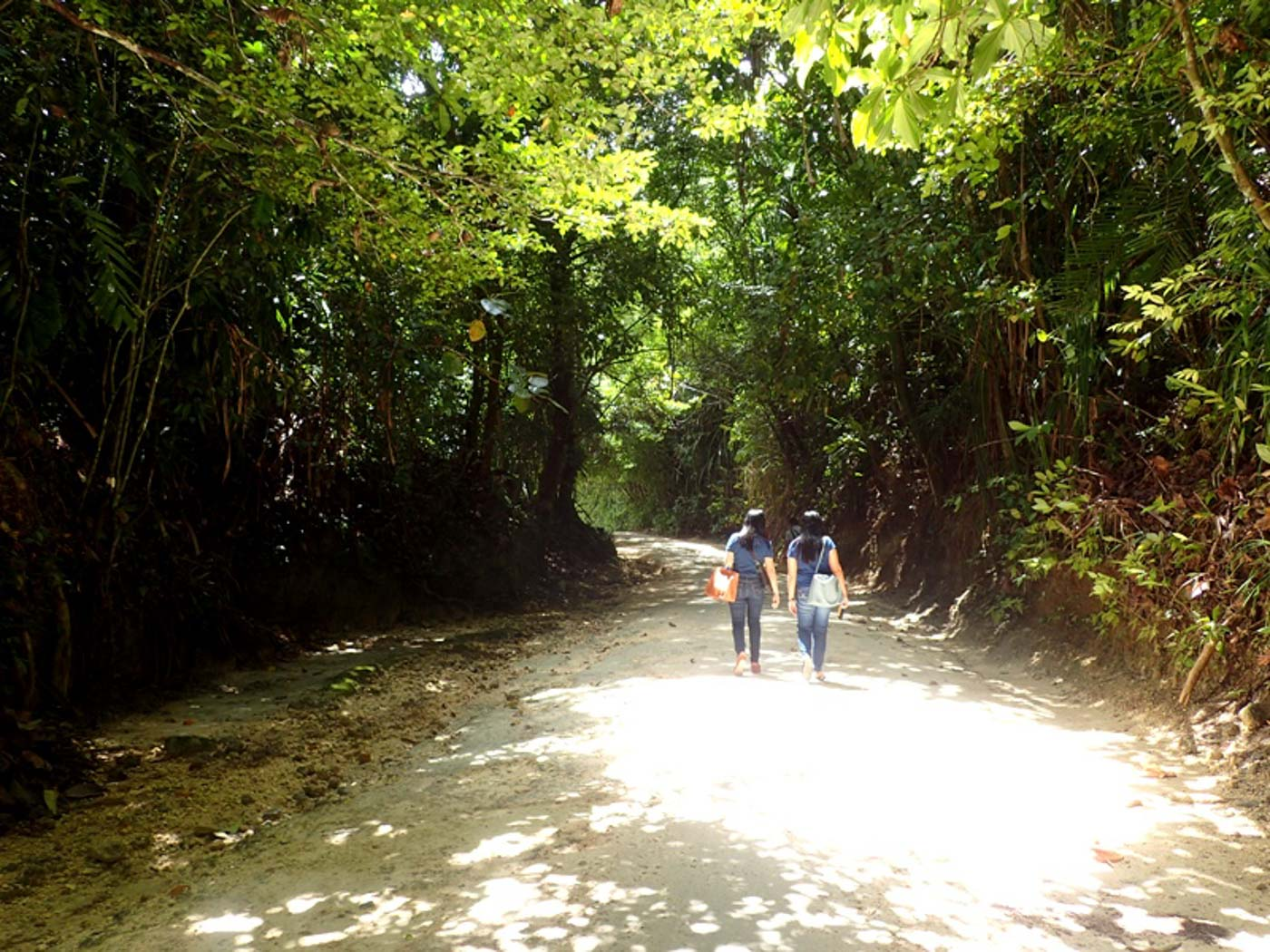 FOREST WALK. From the ticketing and briefing area, tourists headed to the Enchanted River can walk under the shade of native trees for around five minutes. Photo by Claire Madarang/Rappler