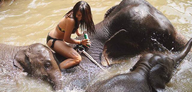 Patara Elephant Farm in Chiang Mai, Thailand