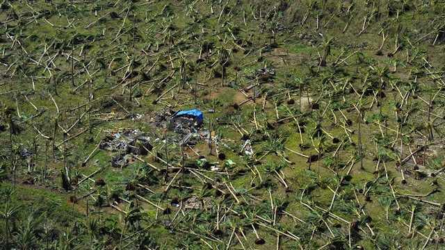 WIPED OUT. This aerial photo shows uprooted coconut trees on a hill near the town of Guiuan, Eastern Samar on November 11, 2013, only days after Super Typhoon Yolanda (Haiyan) devastated the town on November 8. File photo by Ted Aljibe/AFP