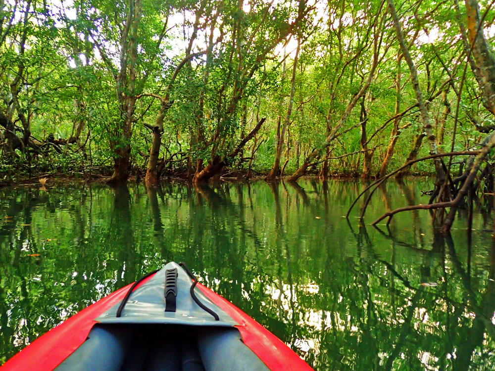 WATERWAY. There are bends and turns along the waterway as you paddle deep into the mangrove forest.