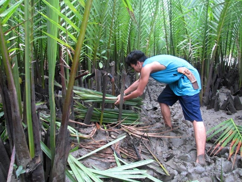LIVELIHOOD. Nipa harvesting is a source of livelihood in Abatan River. Photo courtesy of KayakAsia Philippines