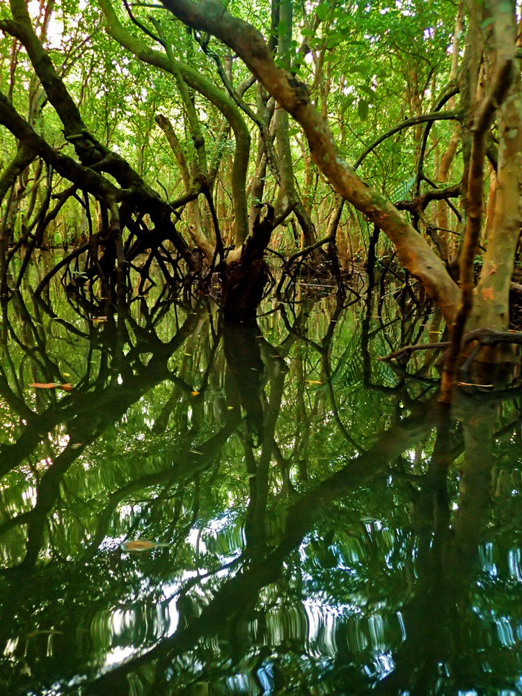 REFLECTION. Abatanu2019s still waters perfectly mirror its mangroves.