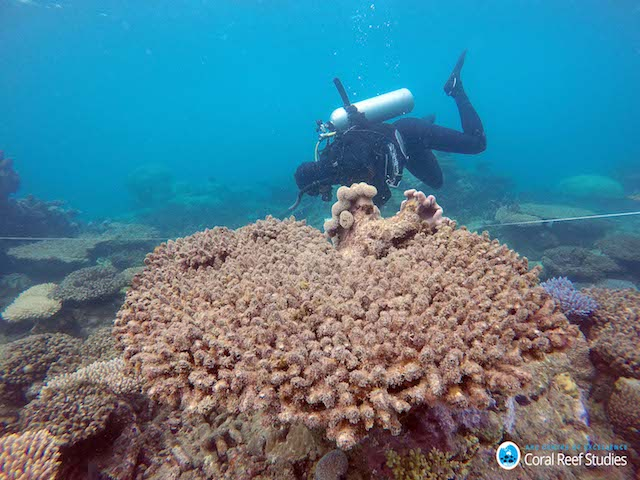 Scientists assess coral mortality on Zenith Reef following the bleaching event, Northern Great Barrier Reef, November 2016. Andreas Dietzel/ARC Centre of Excellence for Coral Reef Studies