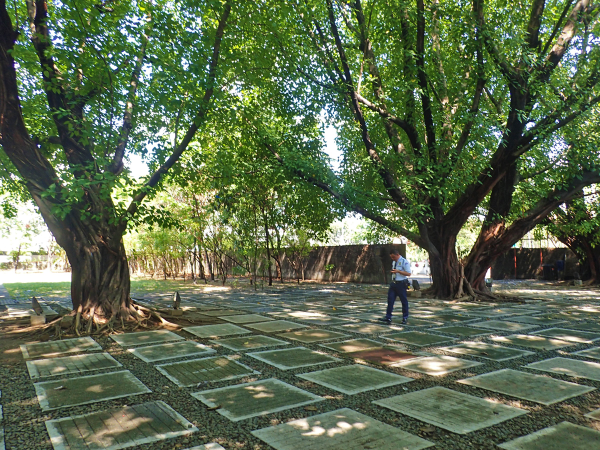 THE TREES AGAIN. After your Martial Law tour there is again the soothing view of the bodhi trees when you step outside.