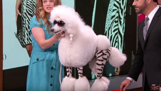 KIM KARDASHIAN. Creative dog groomer Catherine Opson turned this dog into Kim Kardashian on Jimmy Kimmel's show. Screengrab from YouTube/Jimmy Kimmel Live