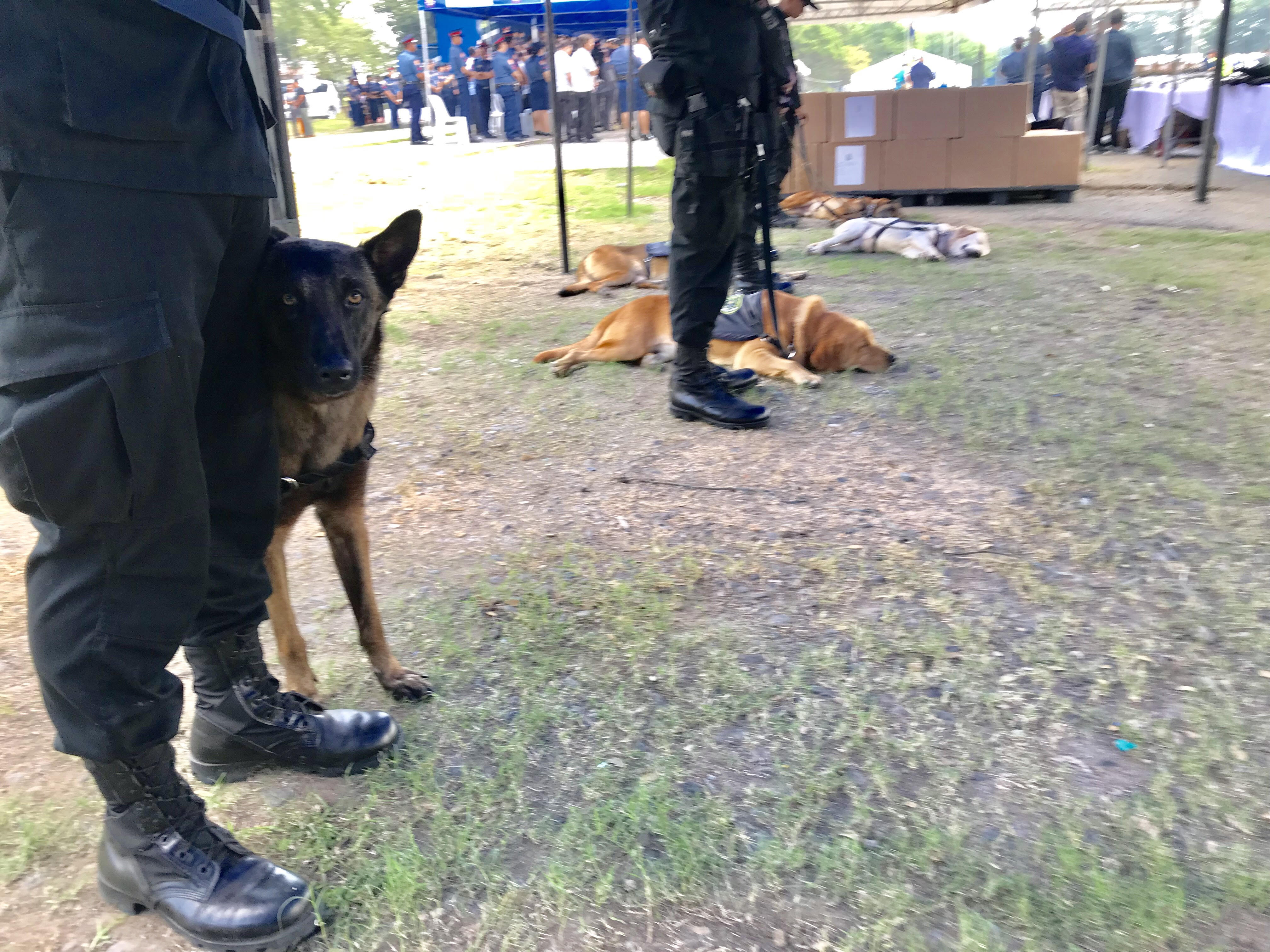 PUPS PRIORITIZED. The PNP presents newly acquired K-9 dogs in Camp Bagong Diwa, Taguig City. Photo by Rambo Talabong/Rappler