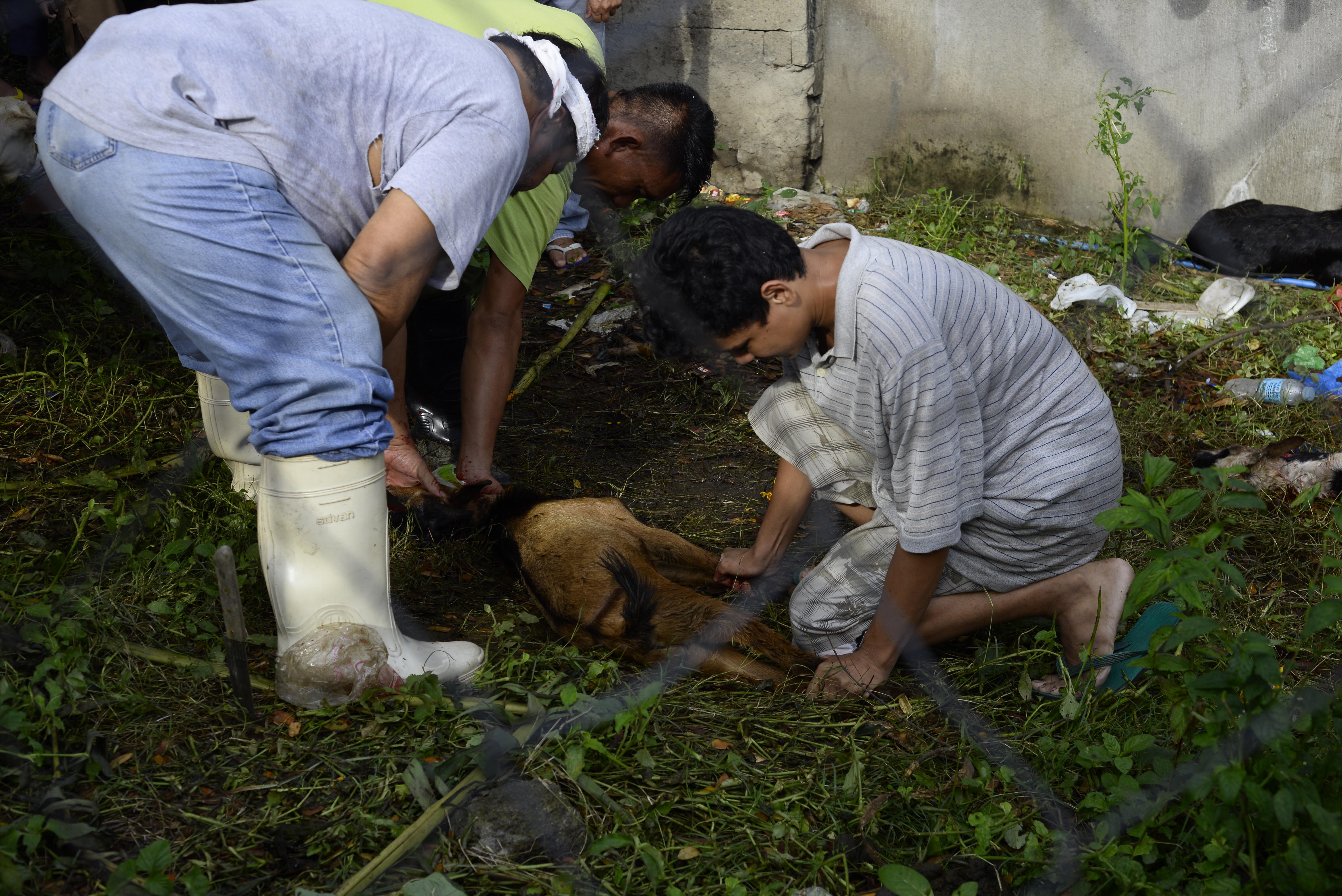 OFFERING. A goat is slaughtered outside the Blue Mosque in Taguig City on August 21, 2018, as part of the Eid'l Adha celebration this year. Photo by Maria Tan/Rappler