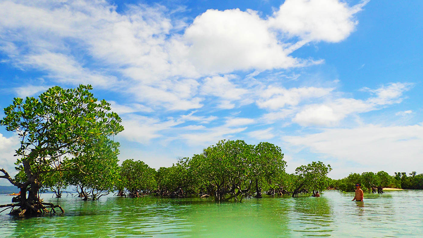 LUSH. The islandu2019s mangrove forests are also worth a visit.