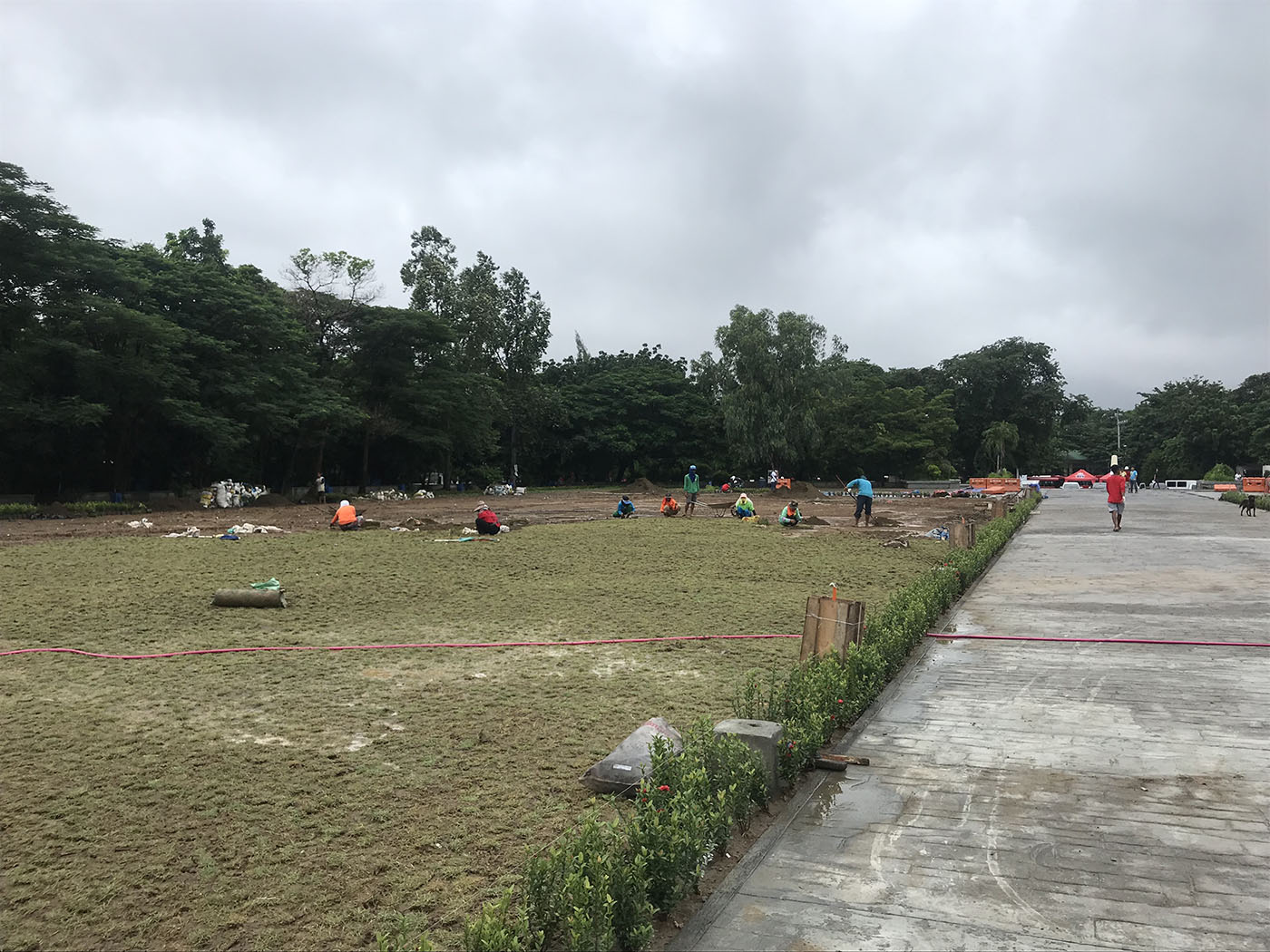 Workers can be seen putting carabao grass on the soil on either side of the central walkway.