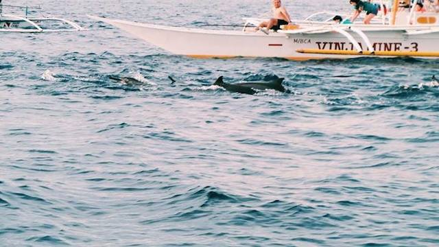 SPOTTED! Every time a pod of dolphins surfaced, the crowds went wild.