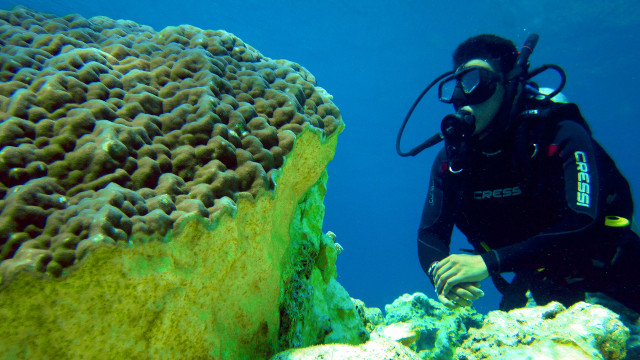 DAMAGED. A diver surveys the damage done by the grounding of FV Min Long Yu to a 500-year-old Porites Coral