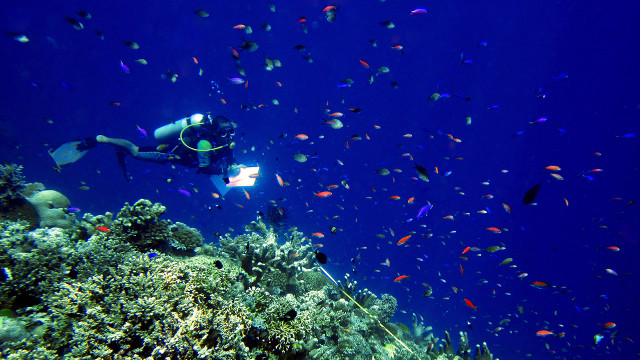 COUNTING FISH. Segundo 'Seconds' Conales keeps tabs on the fish in Tubbataha