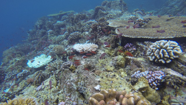 SANCTUARY. No other place in the world holds as many species of marine life as the Verde Island Passage, the center of the coral triangle. Photo courtesy of Marine Biological Society