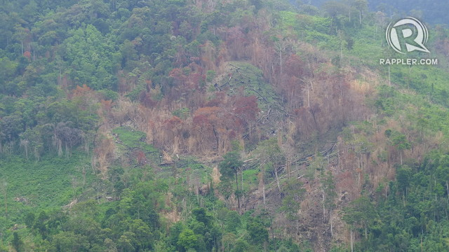 BROWNING. Reforestation sites in the Ipo watershed are destroyed yearly by forest fires. Photo by Pia Ranada/Rappler
