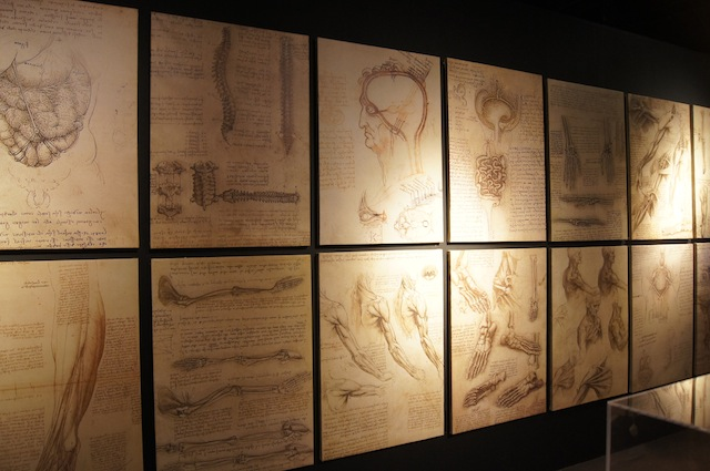 HUMAN ANATOMY. A row of images highlighting Da Vinci's anatomical drawings. Photo courtesy Mind Museum