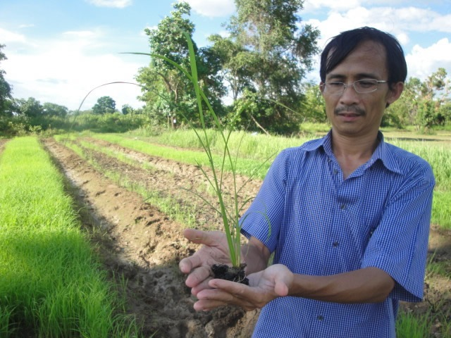 DR. KOMA inspecting a rice field in Cambodia. Photo courtesy of CEDAC