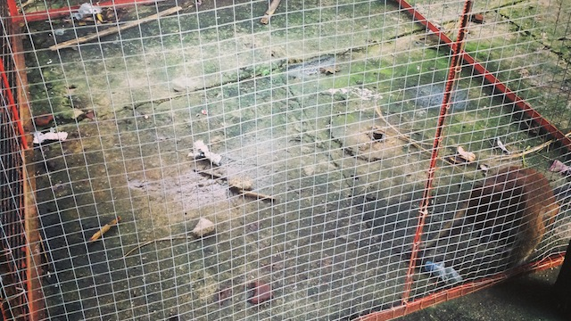 POOR PRIMATE. This filthy cage is clearly animal abuse.