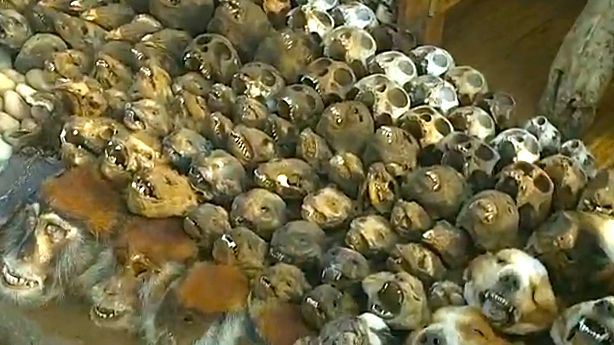VOODOO MARKET, LOME. Screen grab from YouTube (alastair51060)