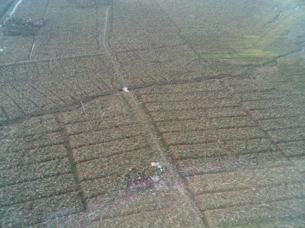 EXTENT OF DAMAGE. u0022Flattened banana trees as far as the eye can see.u0022 Photo and caption by Interior Secretary Manuel Roxas II